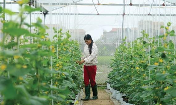 TPHCM đẩy mạnh chuyển dịch cơ cấu nông nghiệp