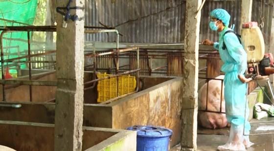 Lực lượng thú y tỉnh Kiên Giang phun thuốc khử trừng, phòng bệnh lây lan