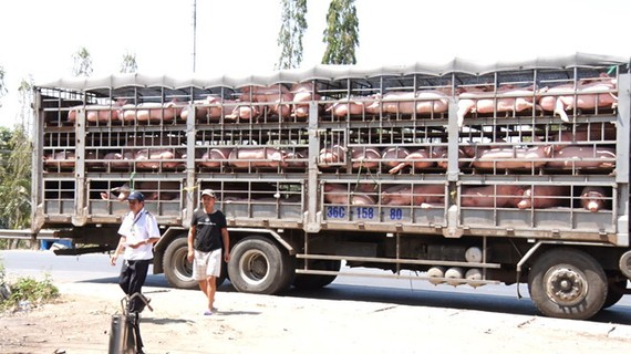 TPHCM: Thành lập tạm thời 2 chốt kiểm dịch động vật