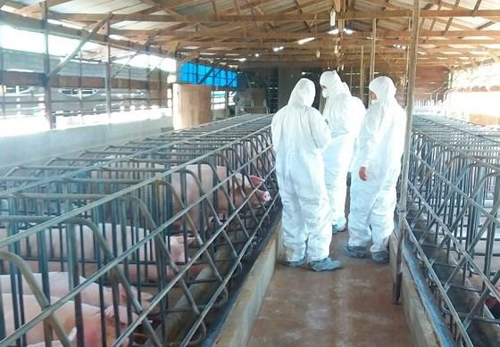 Cơ quan chức năng kiểm tra tại cơ sở xuất hiện bệnh tả lợn châu Phi tại thôn An Bình, xã Liên Hiệp, huyện Đức Trọng, Lâm Đồng