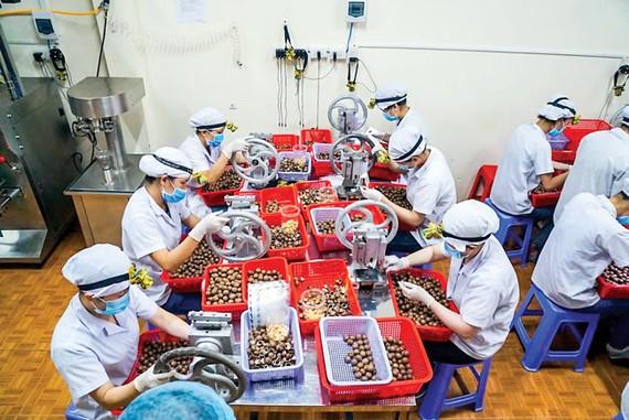 EVFTA sẽ giúp kim ngạch xuất khẩu của Việt Nam tăng thêm 20% vào năm 2020  (trong ảnh: chế biến hạt macca xuất khẩu). Ảnh: VIẾT CHUNG
