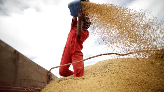 Trung Quốc tạm dừng mua nông sản Mỹ, dọa áp thuế nhập khẩu mới