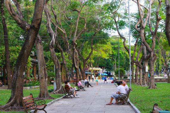 TPHCM thiếu cây xanh trầm trọng