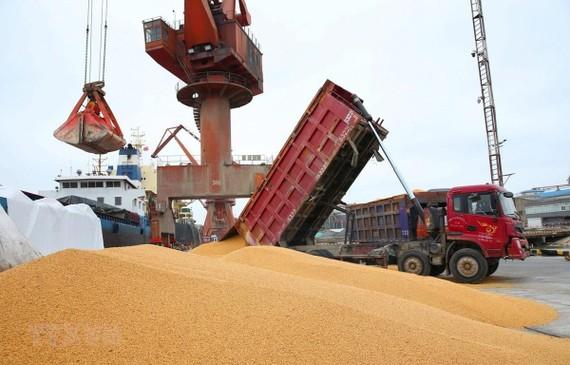 Công nhân bốc dỡ đậu tương nhập khẩu tại cảng Nam Thông, tỉnh Giang Tô của Trung Quốc. (Ảnh: AFP/TTXVN)