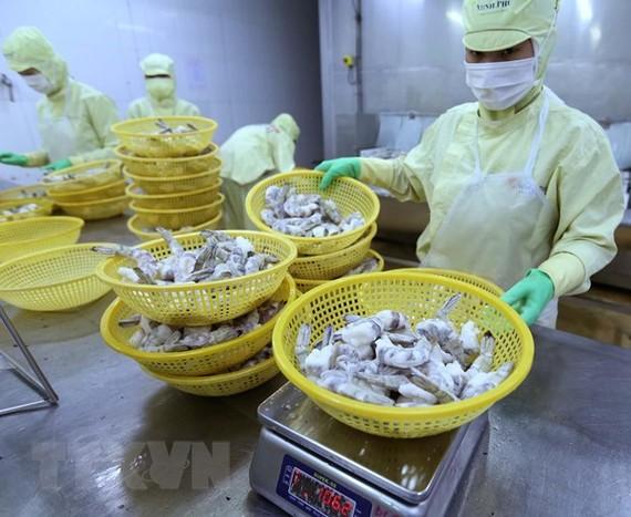 Đóng sản phẩm tôm xuất khẩu tại nhà máy của Công ty Cổ phần thủy sản Minh Phú Hậu Giang. (Ảnh: Vũ Sinh/TTXVN)