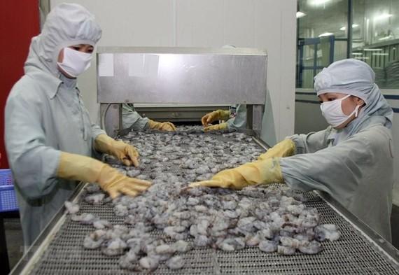 Chế biến tôm xuất khẩu tại Hậu Giang. (Ảnh: Huy Hùng/TTXVN)