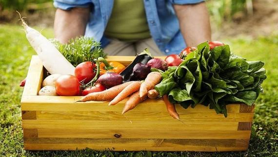 Theo Đề án, đến năm 2030, diện tích cây trồng hữu cơ đạt khoảng 7-10%. Ảnh minh họa