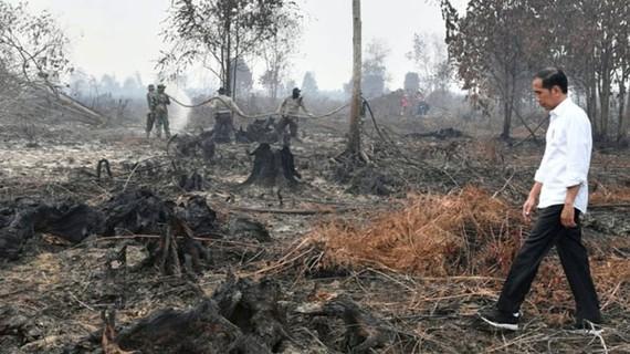 Indonesia: bắt giữ gần 200 người gây cháy rừng