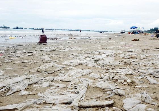 Cả một vùng bờ biển bãi Sau, Mũi Né bị phủ kín bởi rác thải