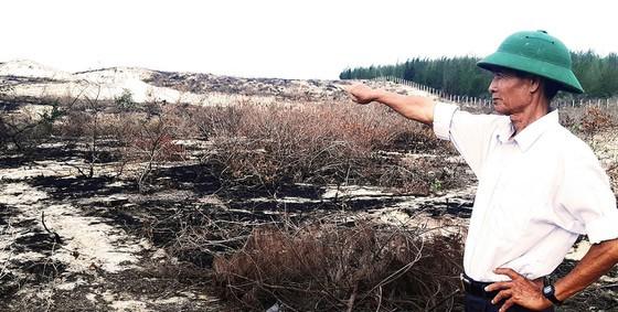 Hàng trăm hécta rừng dương bị tàn sát, người dân lo ngại rồi đây bão cát uy hiếp nhà cửa