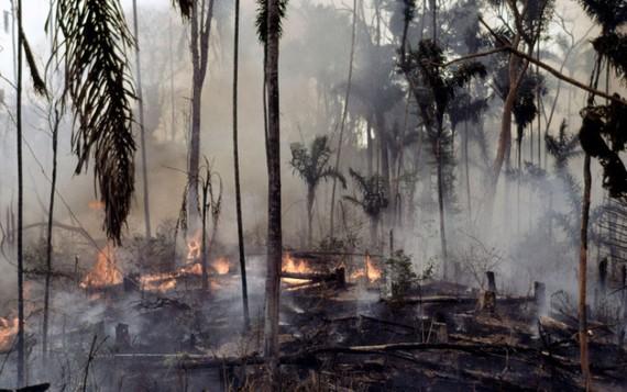 Vụ cháy rừng Amazon, Brazil gây thiệt hại nặng nề cho nước này. (WWF / Mauri Rautkari)