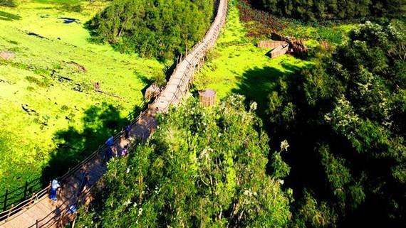 Trong hành trình du xuân về vùng Bảy Núi, rừng tràm Trà Sư đã đón gần 40.000 lượt du khách đổ về cùng thản bước trên cây cầu tre dài nhất Việt Nam