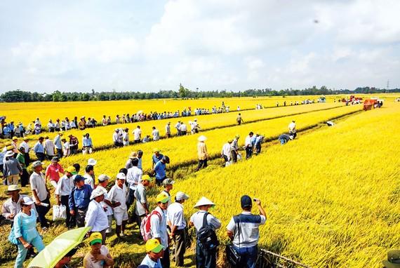 Thời điểm này phải tính toán linh hoạt trong việc xuất khẩu gạo.