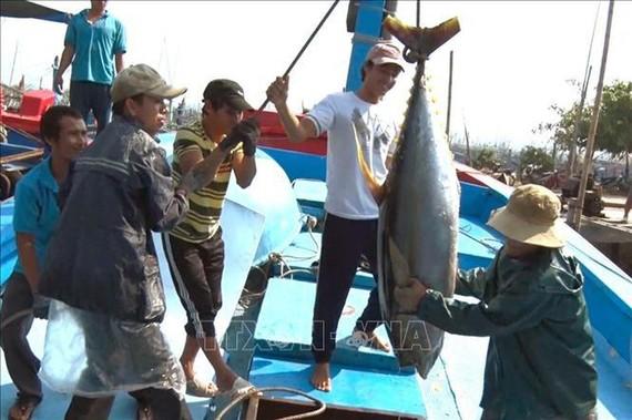 Tiếp tục triển khai nhiệm vụ cấp bách chống khai thác hải sản IUU