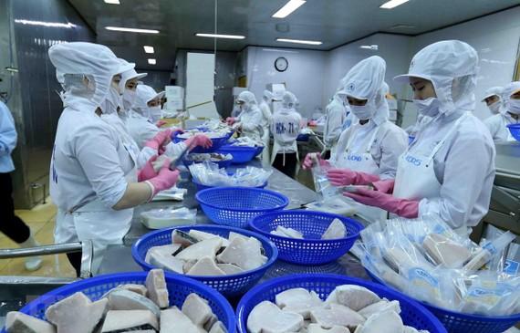 Dây chuyền chế biến cá ngừ đại dương đông lạnh xuất khẩu của Công ty Cổ phần Thủy sản Bình Định đảm bảo các tiêu chuẩn bắt buộc của EU. (Ảnh: Vũ Sinh/TTXVN)