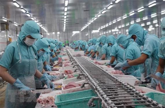 Chế biến cá tra xuất khẩu tại nhà máy ở tỉnh Đồng Tháp. (Ảnh: TTXVN)
