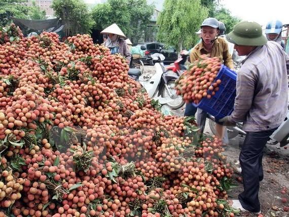 Kết nối sản xuất, tiêu thụ nông sản thực phẩm vùng kinh tế phía Nam