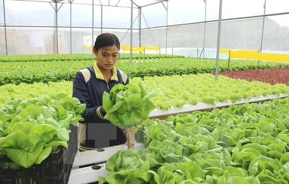 Kích cầu nội địa - chiến lược lâu dài ngành nông nghiệp