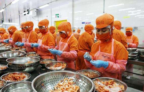 Chế biến tôm xuất khẩu tôm của Công ty TNHH Thông Thuận chi nhánh Ninh Thuận. (Ảnh: Công Thử/TTXVN)