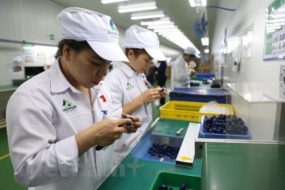 Doanh nghiệp đầu tư công nghệ đón đầu các hiệp định thương mại mới. (Ảnh: Đức Duy/Vietnam+)