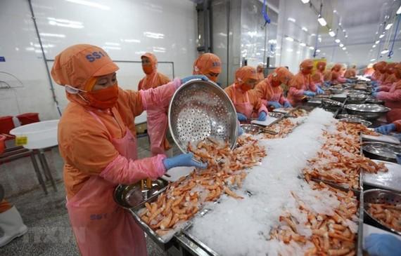 Chế biến tôm đông lạnh xuất khẩu tại Công ty TNHH Thông Thuận, Khu công nghiệp Thành Hải (Ninh Thuận). (Ảnh: Danh Lam/TTXVN)