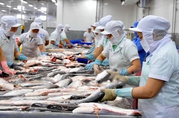 Chế biến cá tra xuất khẩu. (Ảnh: An Hiếu/TTXVN)