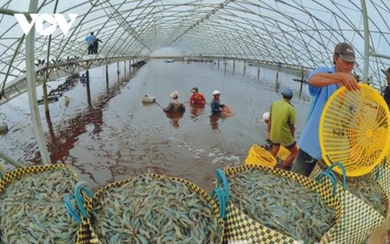 Giá thức ăn thủy sản và chăn nuôi tăng cao khiến doanh nghiệp lao đao