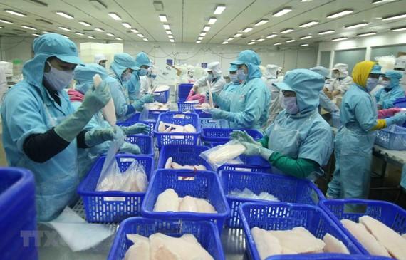 Chế biến cá tra xuất khẩu tại nhà máy của Tập đoàn Sao Mai (tỉnh Đồng Tháp). (Ảnh: Vũ Sinh/TTXVN)