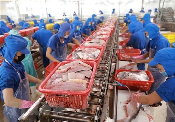 Chỉ có khoảng 30% các nhà máy chế biến thủy sản tại khu vực Nam Trung Bộ duy trì được sản xuất cầm chừng theo điều kiện đảm bảo được 3 tại chỗ. (Ảnh: Vũ Sinh/TTXVN)