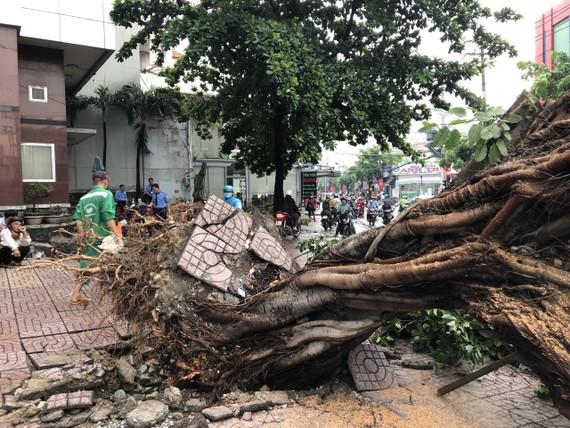 Hiện trường cây xanh bật gốc ở giao lộ Nguyễn Văn Quá – Trường Chinh. Ảnh: CHÂU TRỊNH