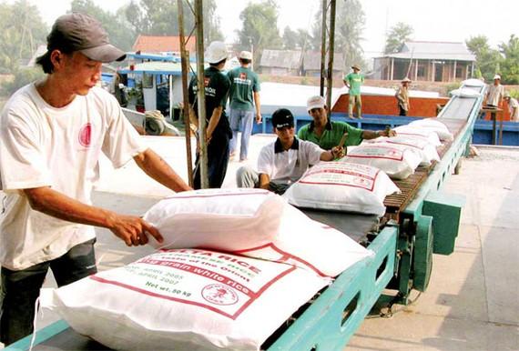 越南大米出口生產線。