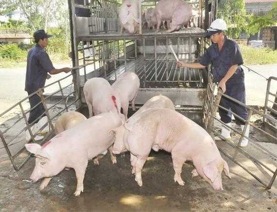 本市加強防止非洲豬瘟檢查工作。