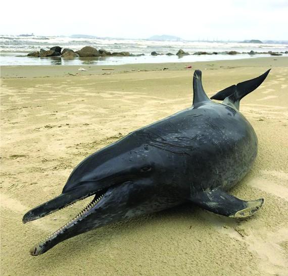 在廣義海灘發現 60 公斤鯨魚屍體