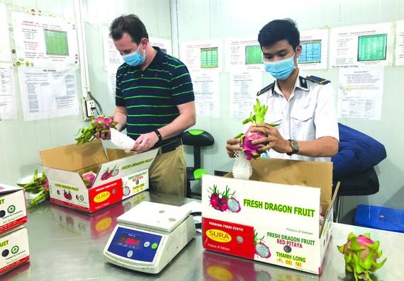 美國專家在檢查準備出口的火龍果。