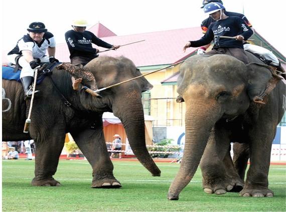 泰國舉辦「國王盃」大象馬球賽
