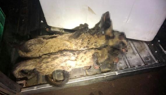 Cơ quan công an phát hiện hơn 100 cá thể thú rừng trong thùng xe khách