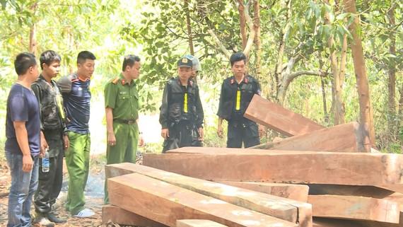 Cơ quan công an đang điều tra vụ phá rừng quy mô lớn tại Công ty lâm nghiệp Ea Kar