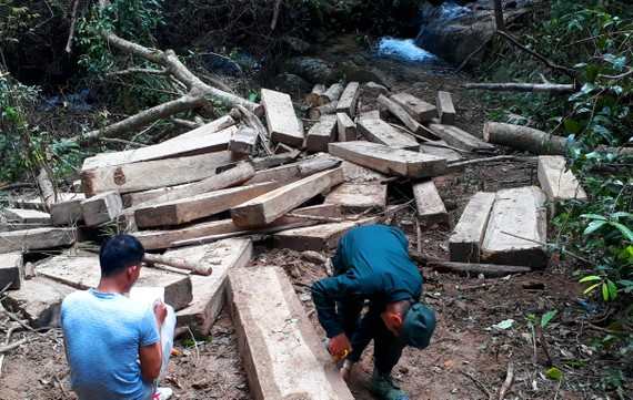 Bãi gỗ khủng lồ được phát hiện
