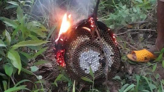 Tổ ong đã đốt các cháu bé