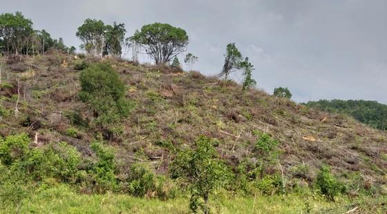 Vị trí rừng bị phá