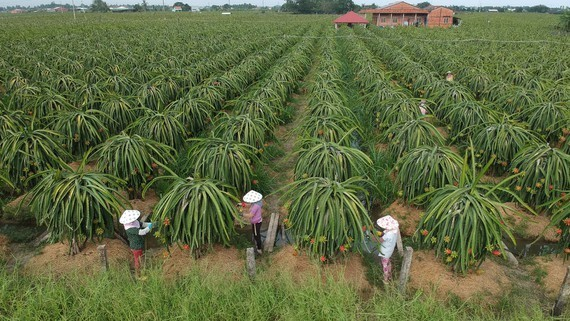 Gov't to strengthen management at regions with agricultural Production Unit Code