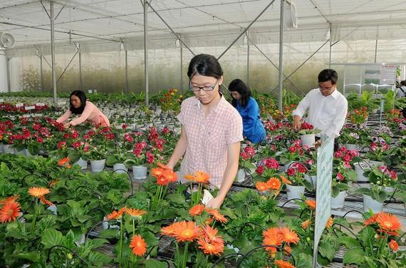 Cây giống hoa trồng tại Trung tâm Công nghệ sinh học TPHCM. Ảnh: CAO THĂNG