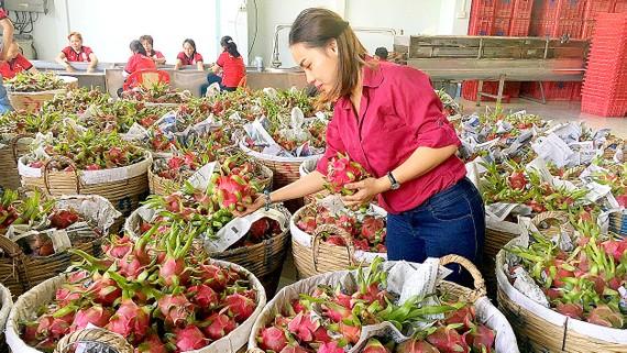 Nhờ đáp ứng được quy định của nhà nhập khẩu,  Công ty Vina T&T Group xuất khẩu nhiều trái cây sang Mỹ