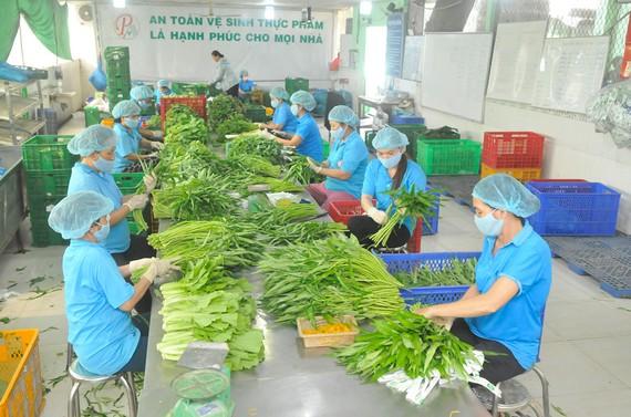 Chế biến rau phục vụ xuất khẩu và tiêu dùng trong nước tại HTX Phước An, huyện Bình Chánh, TPHCM. Ảnh: CAO THĂNG