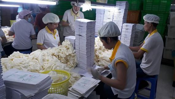Sản xuất găng tay y tế xuất khẩu tại Công ty VRG-Khải Hoàn