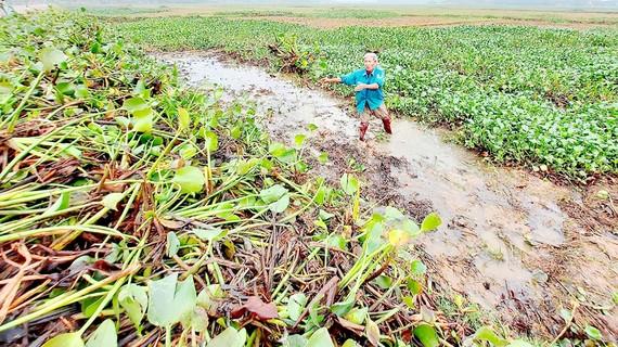 Người dân ở Thạch Hà, Hà Tĩnh dọn ruộng để sản xuất vụ xuân. Ảnh: DƯƠNG QUANG