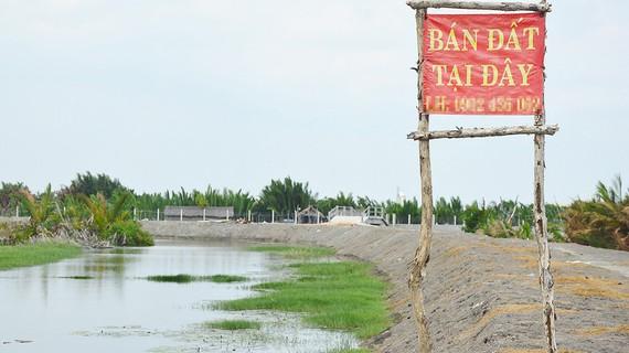 Nhiều đồng ruộng, vuông tôm ở huyện Cần Giờ đang được rao bán ào ạt