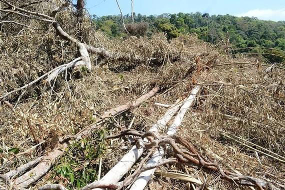 Diện tích rừng ở tiểu khu 1680 bị tàn phá