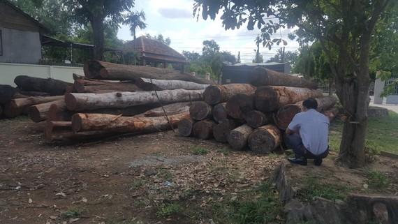 """Hàng chục khối gỗ lậu của Phượng """"râu"""" bị cơ quan công an thu giữ"""