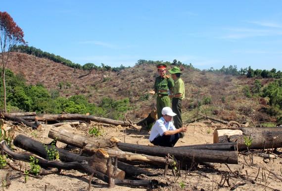 Thêm 20ha rừng bị lâm tặc tàn phá tại Bình Định